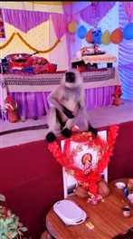 देवी भागवत कथा स्थल में पहुंचे लंगूर की लोगों ने की पूजा अर्चना