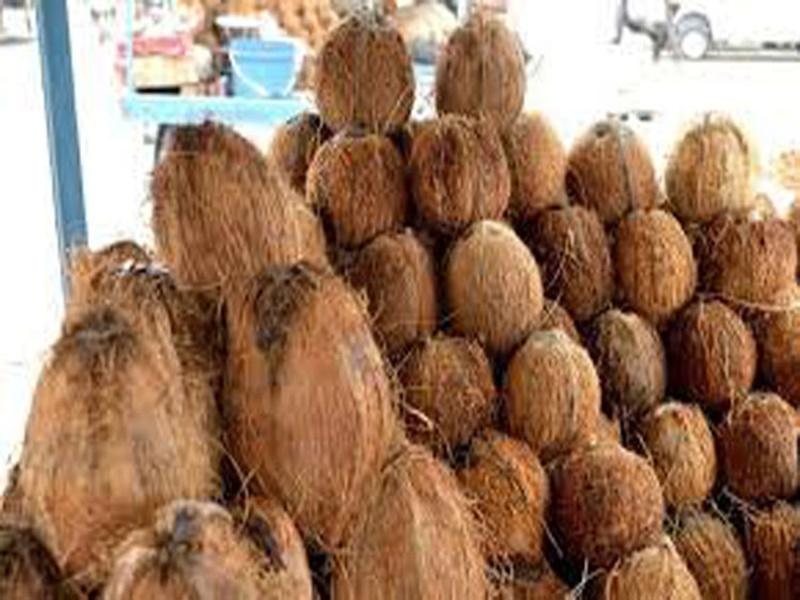 Coconut, Almond Indore Price: नारियल में माल की कमी से भाव में तेजी, बादाम में खरीदी निकलने की उम्मीद