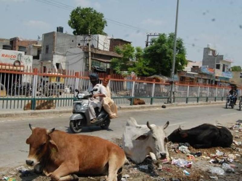 Jabalpur Column: पशु भी खाएंगे चॉकलेट, वो भी आइएसओ वाली