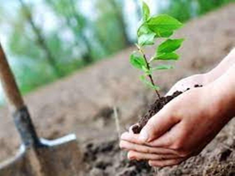 मध्य प्रदेश के हर संभाग में 10 हजार पौधे रूट ट्रेनर में तैयार होंगे