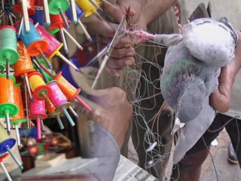 Gujarat: उत्तरायण पर खूब हुई पतंगबाजी लेकिन, इंसानों समेत सैकड़ों पक्षी हुए घायल