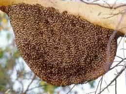 Bilaspur News: मैनपाट की आदिवासी महिलाएं मधुमक्खी पालन को बना रही आय का साधन
