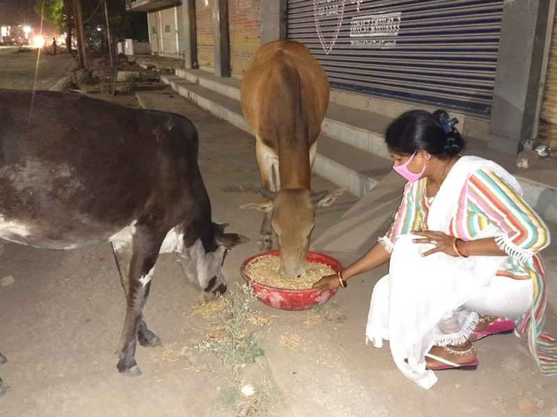 Humanity in Lockdown in Bilaspur: कोरोना काल में गायों की रक्षा व समय पर भोजन खिलाना ही बिलासपुर की चुन्नी का लक्ष्य