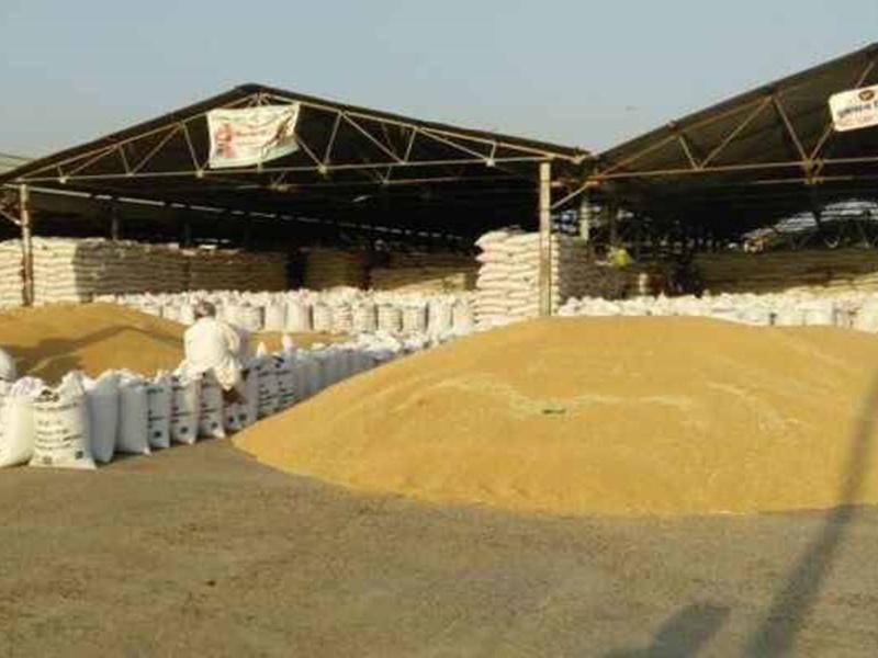 Rajasthan: कृषि मंडी और दाल मिलों में शुक्रवार को रहेगी हड़ताल, दालों पर स्टॉक लिमिट लगाने का विरोध