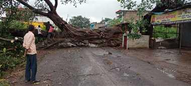सड़क पर गिरा बरगद का पेड़, 14 घंटे बाधित रहा आवागमन