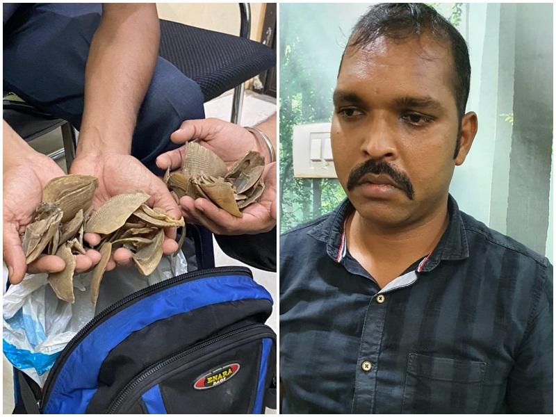Crime News In Raipur: पैंगोलिन शल्क के साथ रायपुर में सीआइएसएफ का सब इंस्पेक्टर गिरफ्तार
