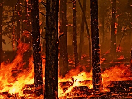 Fire In Forest Indore: मन्नत और महुआ बिनने के लिए जलाया जंगल, महीनेभर में चालीस से ज्यादा स्थानों पर लगी आग