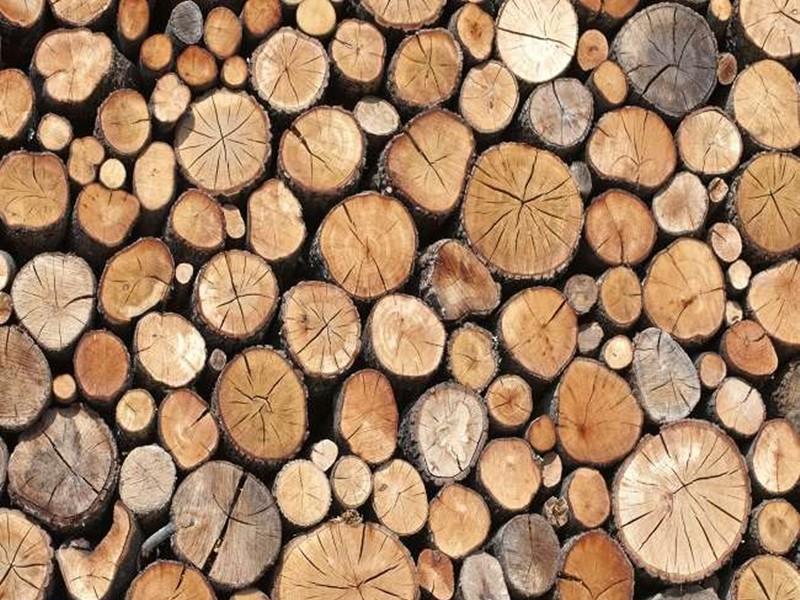 Jabalpur News: कोरोना काल में मंडला डिपो में हो रही लकड़ी की नीलामी विरोध के बाद टली