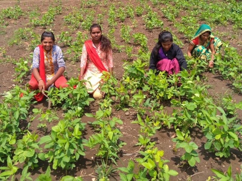 Khandwa 10th Result : मजदूर की बेटी का कारनामा, खेत में काम करते हुए 10th में शानदार प्रदर्शन