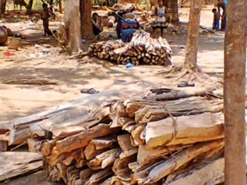Jabalpur News: अब चिता की लकड़ी के नाम पर भी लूटखसोट