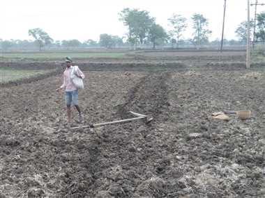 धान की बोआई में जुटे किसान