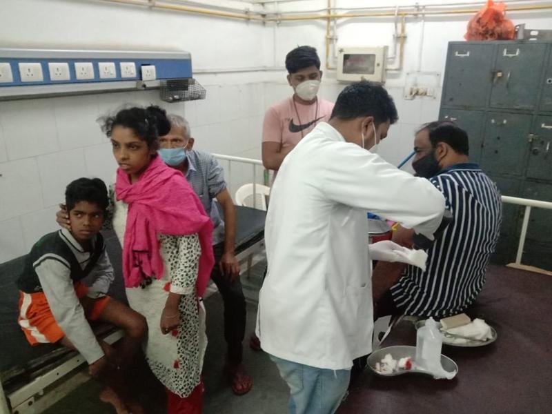 Bilaspur News: राजेंद्रनगर में लंगूरों का आतंक, छह लोगों को किया घायल