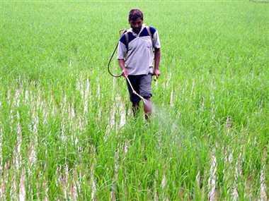 किसानों को सलाह, फसलों की तैयारी के साथ पशुओं का भी रखें विशेष ध्यान