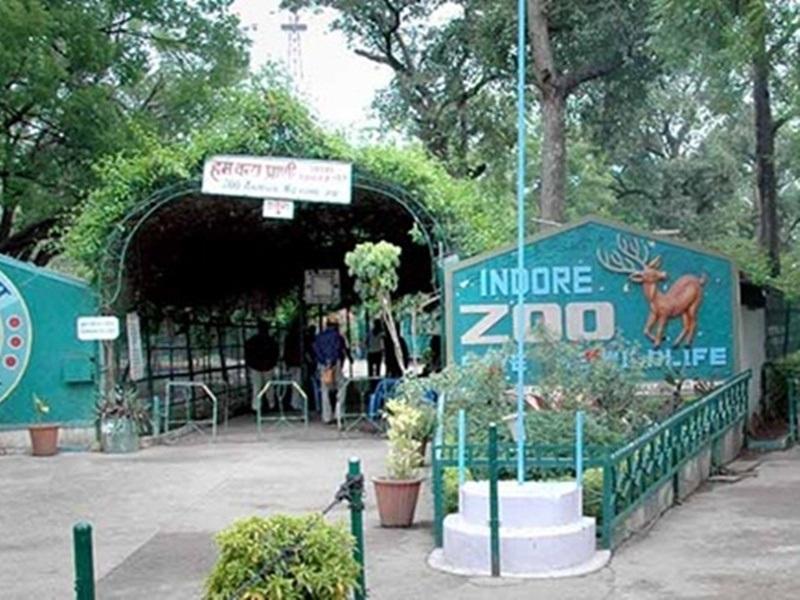 Unlock Indore News: रीजनल पार्क, मेघदूत उपवन और कमला नेहरू प्राणी संग्रहालय खुले