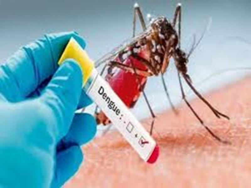 Indore Health News: मौसम के साथ डेंगू का असर बढ़ा, कोरोना के चलते इलाज बना चुनौती