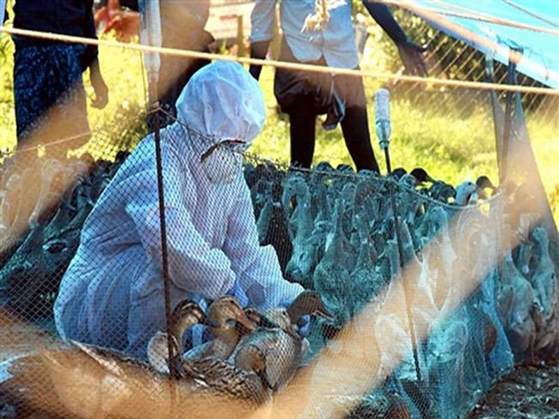 Bird Flu News : दिल्ली, उत्तराखंड में पक्षियों की मौत का क्रम जारी, 26 जनवरी तक लाल किला बंद