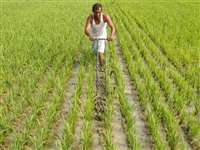 PM Kisan samman Nidhi: जानिए कहां रुकी है पीएम किसान योजना की 8वीं किस्त, कब तक मिलेगा पैसा