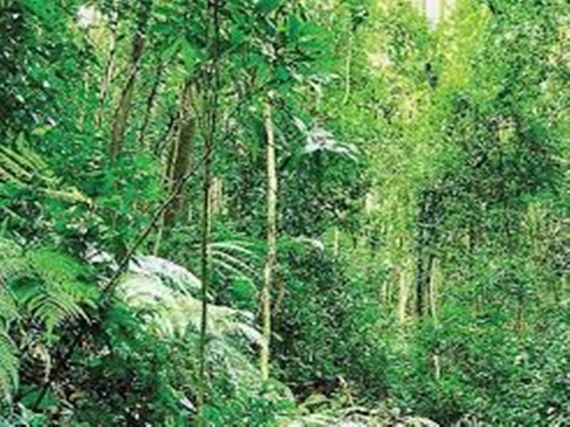 एनजीटी के निर्देश बक्सवाहा के जंगल में अधिकारी की बगैर अनुमति न हो पेड़ को कोई भी नुकसान