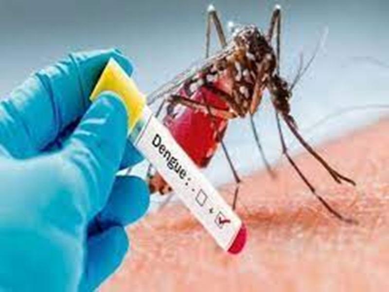 Dengue in indore: इंदौर में मरीजों की संख्या के साथ बढ़ी डेंगू की जांच