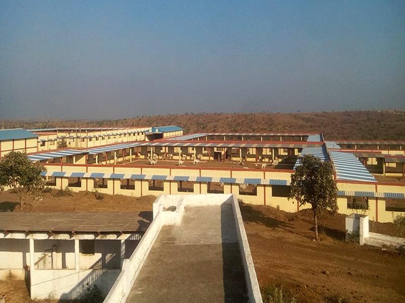 मध्य प्रदेश में गो-कैबिनेट की पहली बैठक के लिए सजने लगा आगर-मालवा जिले में गो-अभयारण्य