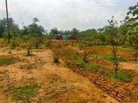 वन विभाग की हरी-भरी रोपणी साफ कर अतिक्रमण की तैयारी