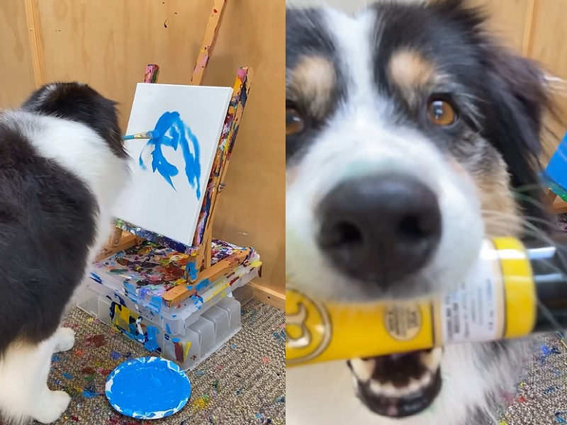 Viral Video: इस प्यारे से कुत्ते ने फूल की पेंटिंग कर सभी को हैरानी में डाल दिया, खुद देखें वीडियो