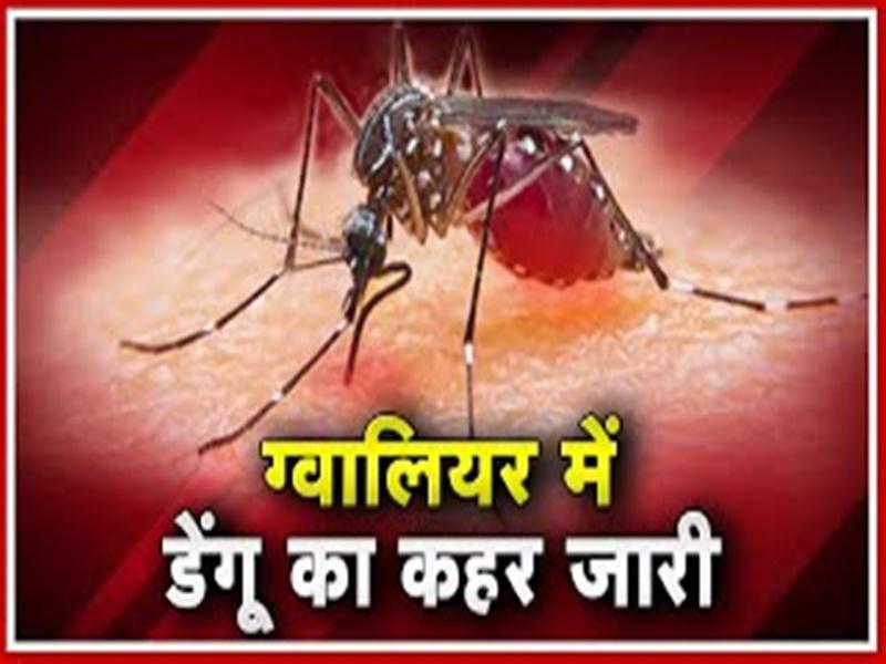 Dengue in Gwalior: जेएएच में डेंगू ने डाला डेरा, डाक्टर व नर्सेस डेंगू की चपेट में