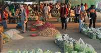 व्यापारी डंगरबाड़ी से थोक में सब्जी लाकर तीन से चार गुना कमा रहे हैं मुनाफा