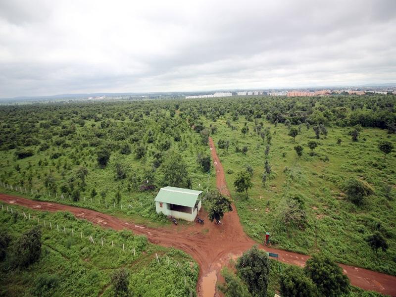 Madhya Pradesh News: जंगल में तब्दील हुई पथरीली पहाड़ी, अब भोपाल को दे रही ऑक्सीजन
