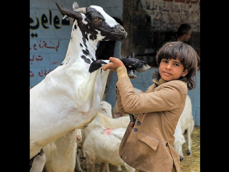 Eid Al Adha 2021: बकरीद पर शैतान को पत्थर मारने की परंपरा भी शामिल है, इन नियमों से होती है कुर्बानी