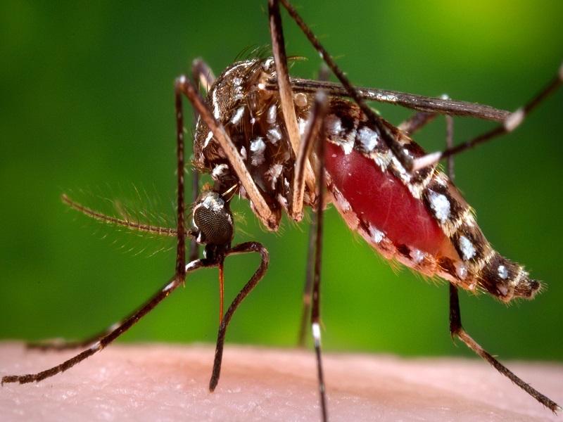 Zika Virus Update: केरल में बढ़ा जीका वायरस का संक्रमण, 38 लोगों के संक्रमित होने की खबर