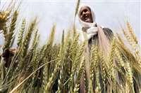 आलेख : कृषि उत्थान के नए पायदान पर देश - राजनाथ सिंह