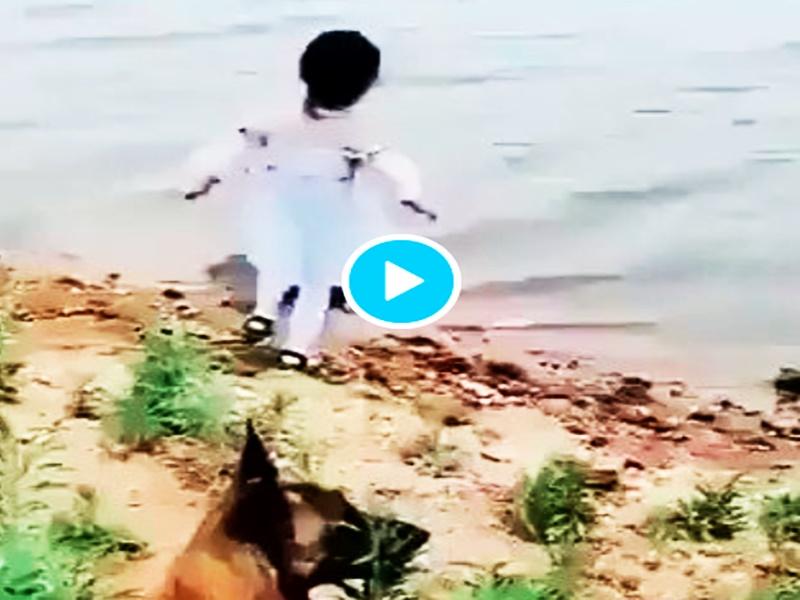कुत्ते ने मासूम बच्ची को पानी में डूबने से बचाया, सोशल मीडिया पर वायरल हो रहा Video