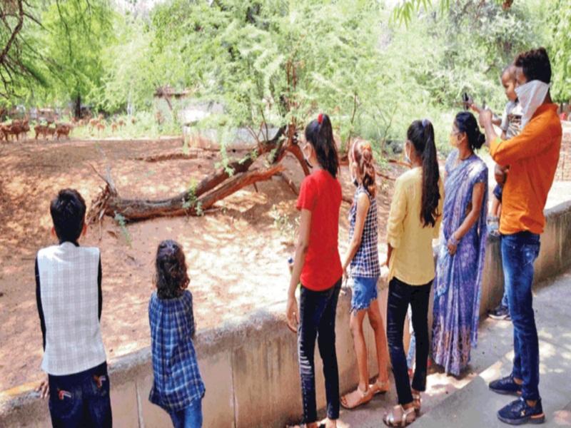 Gwalior Municipal Corporation News: दाे महीने बाद खुला चिड़ियाघर, 700 सैलानियों ने किए जानवरों के दीदार
