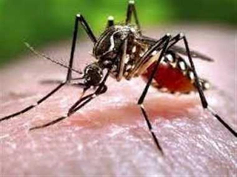 Malaria In Bastar: बस्तर में 60 फीसद बिना लक्षण वाले मलेरिया के मरीजों ने बढ़ाई चिंता