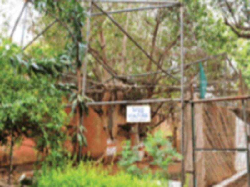 Gwalior Zoo News: चिड़ि़याघर के गुड़ी गुड़ा नाके पर शिफ्ट हाेने के बाद यहां बनेगा गिद्धाें का रेस्क्यू व प्रजनन केंद्र