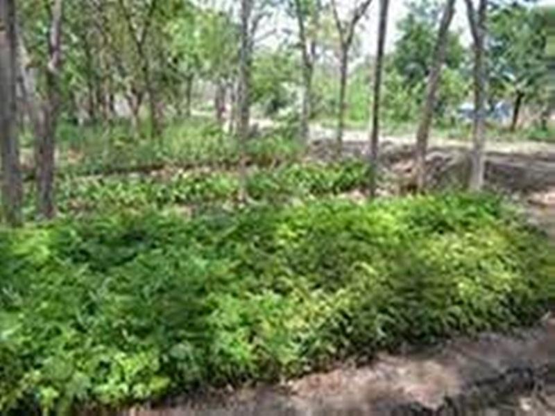 Gwalior Plantation News: पौधारोपण के साथ लोगों को दे रहे जिम्मेदारी