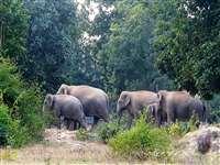 Chhattisgarh: अभयारण्य क्षेत्र से भी बाहर निकल कर गांव से लगे खेतों में पहुंचा 50 हाथियों का दल