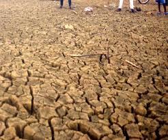 Jabalpur News: सरकारी भूमि के पट्टे जारी करने की प्रक्रिया प्रारंभ, नियम समझने में जुटे अधिकारी