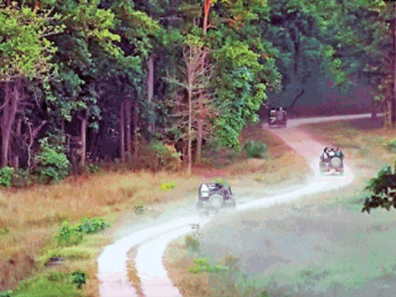 Buffer Zone in MP: 'बफर में सफर' के जरिए संरक्षित क्षेत्रों में पर्यटन बढ़ाएगी मध्य सरकार