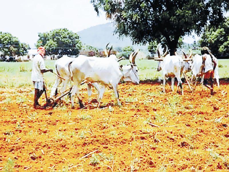 ग्वालियरः खेत में उर्वरक की कमी से फसलों में घट रहे पोषक तत्व,रोग प्रतिरोधक क्षमता हो रही प्रभावित