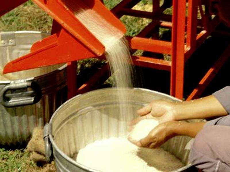 Rice Procurement : इस बार 40 लाख प्लास्टिक बोरों में खरीदना पड़ेगा धान