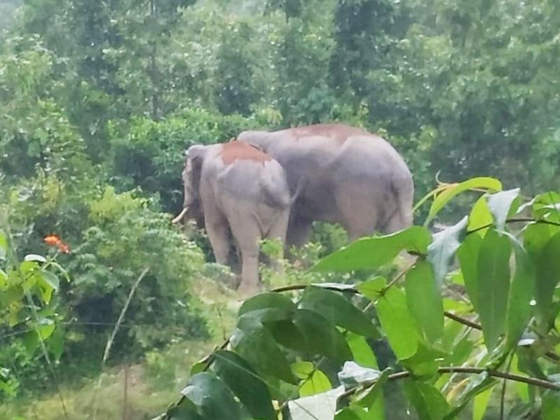 Elephant In Chhattisgarh : करोड़ों फूंके, फिर भी नहीं बना पाए हाथी को साथी