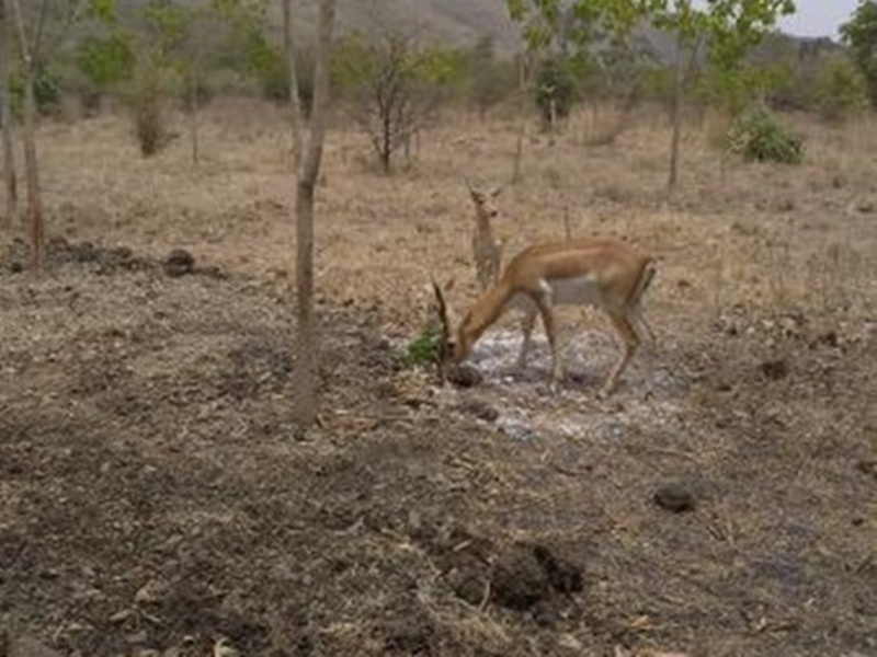 Night Safari Indore: रालामंडल में शुरू होगी नाइट सफारी, उमरीखेड़ा में इको टूरिज्म पार्क बनाया जाएगा