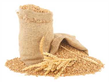 प्रदेश की कृषि मंडियों में लगेंगे 10 टन के तोल कांटे