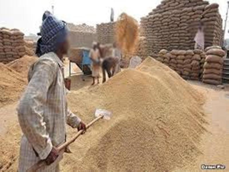 Madhya Pradesh News: मार्च से होगी गेहूं की न्यूनतम समर्थन मूल्य पर खरीद, गोदाम पहले से भरे