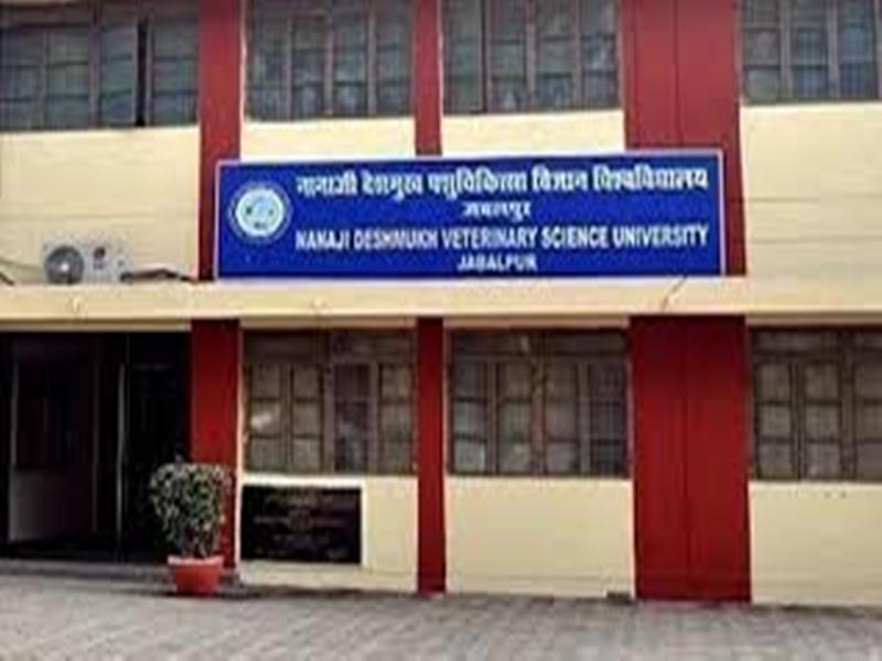 Jabalpur News: वेटरनरी डिप्लोमा कॉलेज में टीए की भर्ती के लिए आज होंगे साक्षात्कार