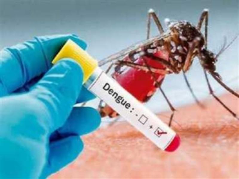 Dengue in Bhopal: सितंबर में डेंगू मरीजों का आंकड़ा 200 के पार, 12 नए मरीज मिले