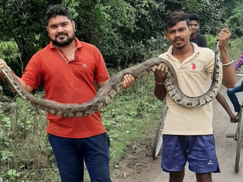 Wildlife News: खेत में 10 फीट लंबा अजगर देख ग्रामीणों में मचा हड़कंप