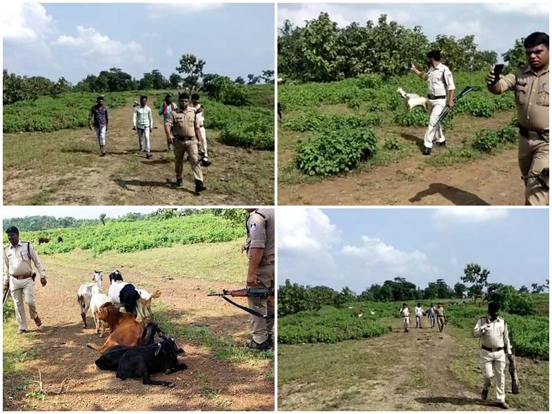 Madhya Pradesh News: VIDEO धार जिले में हथियारों से लैस बदमाशों ने चरवाहों से छीने 50 से अधिक मवेशी, फायरिंग